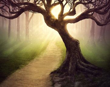 Bildnachweis:Forest pathway © kevron2001 fotolia.com
