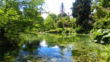 the botanic gardens in christchurch a pond in there with trees very green new zealand