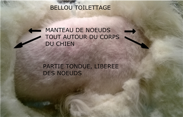 MANTEAU DE NOEUDS - TOILETTAGE - BELLOU TOILETTAGE - TOULON VAR