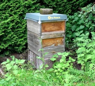 Bienenstock im Garten von Online Experience