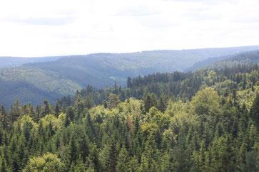 Ausblick vom Turm des Baumwipfelpfades