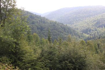 Blick von der Wildbad-Dobler Straße in Richtung Bad Wildbad