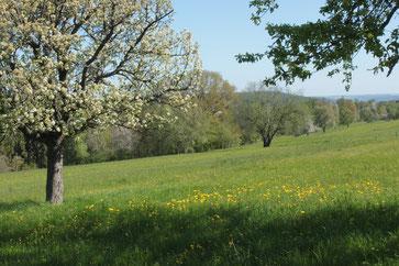 bei Pfinzweiler (G. Franke, 05.05.16)