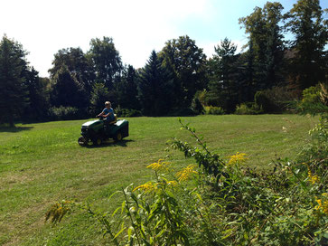 Rasenfläche im Park