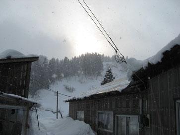 Bild: Schnee-Niigata-Koi