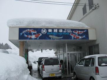 Bild: Hirasawa Seitaro, Marusei Koifarm, Logo