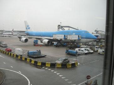 Bild: Japanreise-Koi-Flieger