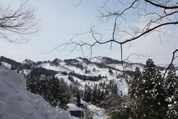 Bild: Japanreise-Koi-Schnee