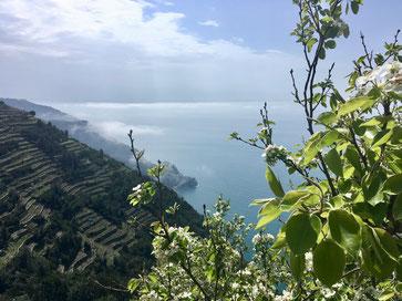 trekking da Manarola a Corniglia nel Parco nazionale Cinque Terre