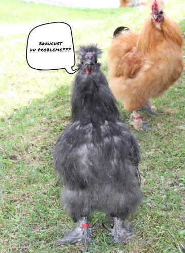 seidenhühner seidenhuhn kärnten klagenfurt