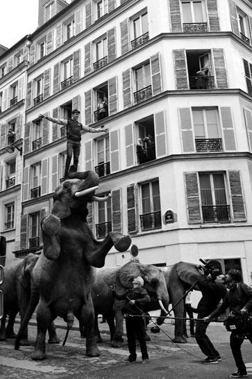 Gaëlle Girbes Circus Life Cirque photographie noir et blanc cirque d'hiver elephant rue street