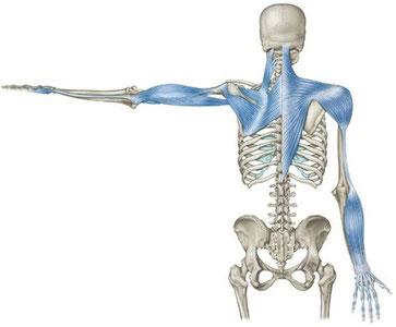 「アームライン 筋膜」の画像検索結果