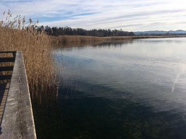 Schilfgürtel des Greifensees nahe bei der Unterkunft (Bild: Dany Kreiner, Festland)