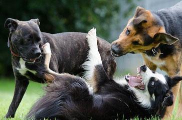 Hunde Ausdrucksverhalten Hundesprache Kommunikation Hundetraining