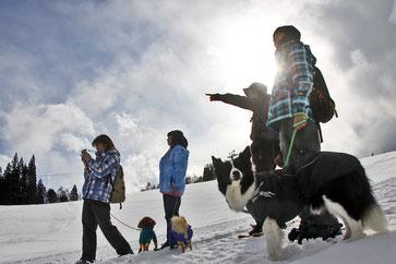 愛犬といっしょに白銀スノーシューツアーへ出かけよう