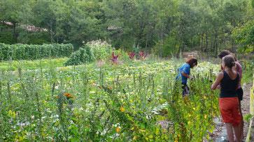 Garten  und Blumenwiese in Longo maï, Limans