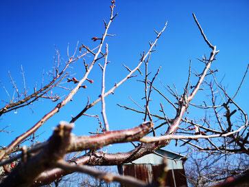 自園地【塩害被害2019】 和×夢 nagomu farm
