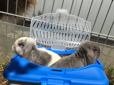 Pina Colada und Elsa bleiben brav in der Transport Box- wenn gemistet wird!