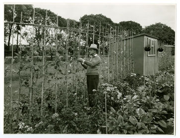 The Leys allotments 1969; image from the Library of Birmingham
