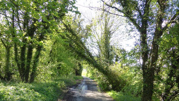 Forge Lane: image by Brownhills Bob on Google Maps - click the image to go to that website.
