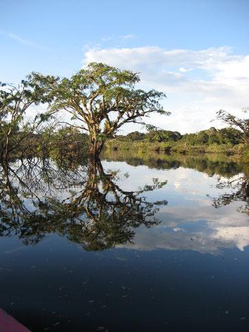 Reisen zum amazonischen Tiefland Ecuadors mit ECUADORline