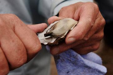 Fische Delikatesse: Austern auf Fanø. Foto: VisitDenmark/PR