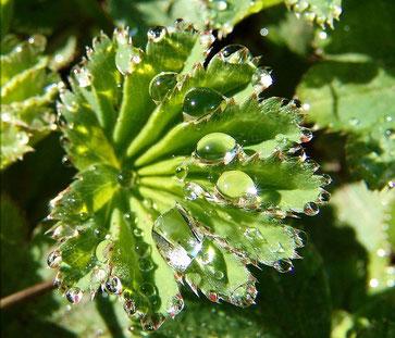Naturheilkunde, Homöopathie & Heilpflanzen bei PMS Prämenstruelles Syndrom Berlin