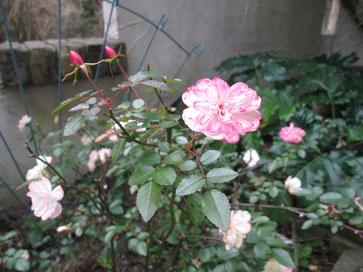 久しぶりに庭を撮りました。