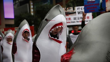 Protests prompt Cathay to ban shark fin transport.