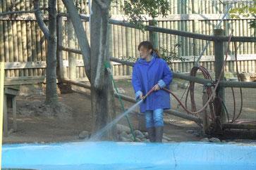 動物園は広いので、掃除も一苦労です