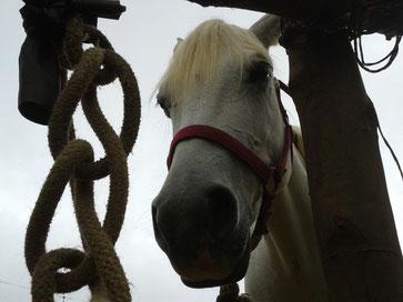 les chevaux du Maido lianedejade974