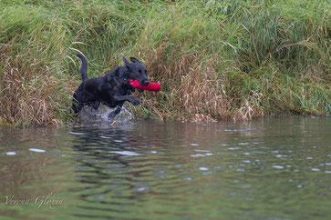 Filby auf direktem Weg zurück über Wasser.
