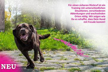 Hundeschule, Butzbach, Hund, Training, Rückruf, sicherer Rückruf , Fun-Dog, Hundetraining