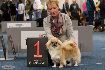 Multi Ch. Dedicated To I'm a Dutch Girl Best of Breed
