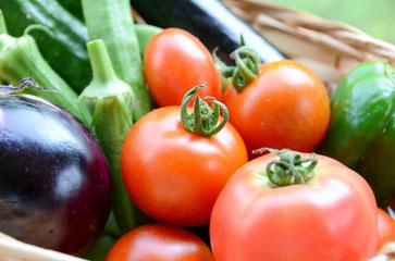 夏野菜の低温障害
