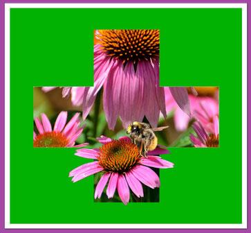 Bild: Erste Hilfe für Pflanzen und Rosen Pflanzengesundheit