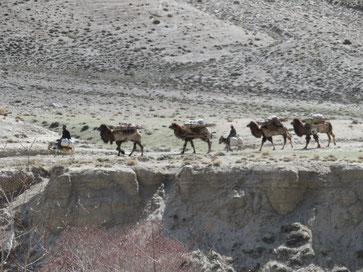 Afghanische Händler reisen mit ihren Kamelen und Eseln auf der anderen Seite des knöcheltiefen Grenzflusses