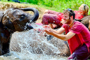 Elephant Care Team Building Thailand