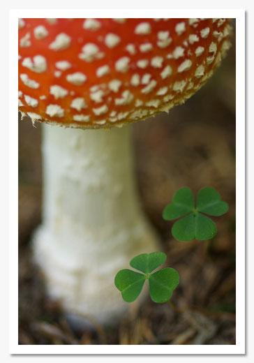 Glücksbringer © c.rebl 2.Platz Kat.Pflanzen