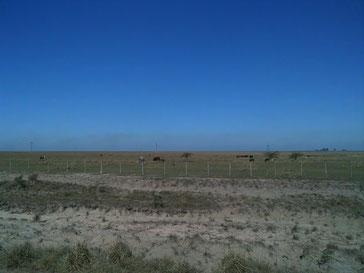 Des vaches, des nuages de chaleur et de poussière rouge...