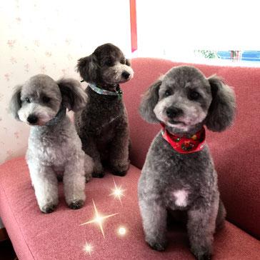 犬美容室なら岐阜県のカノン