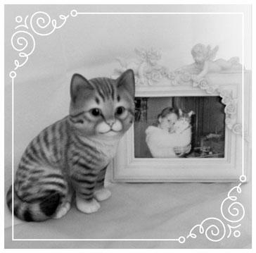 Pauli in seiner Katzenurne