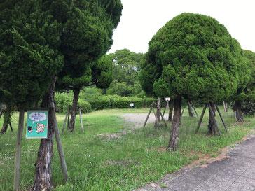 緑のキレイなバーベキューエリア
