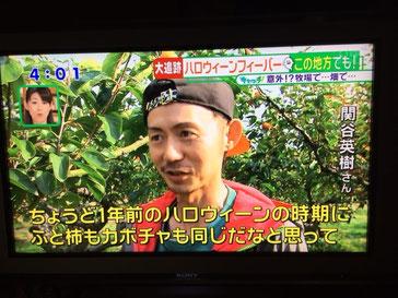 テレビで富有柿の宣伝