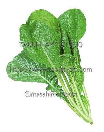 コマツナ 野菜
