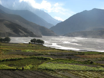 cultures au bord d'une rivière au Népal