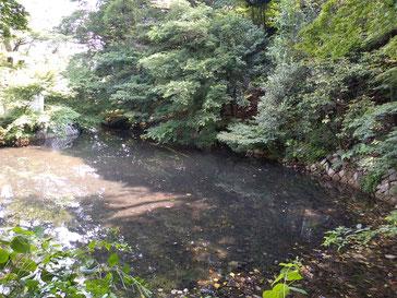 大岡山周辺は丘陵地であり、その地下水脈が水源です