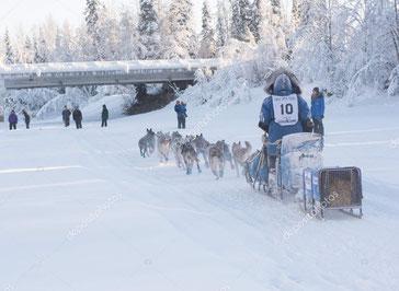 Auf den Spuren des Yukon-Quest