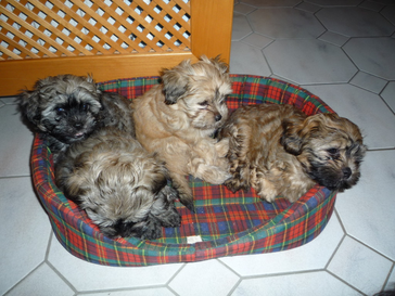 Basko, Bojana, Basil, Boris
