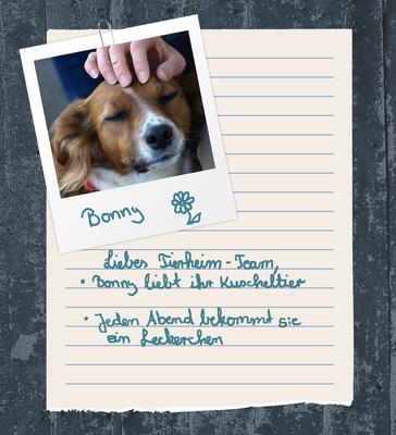 Bild eines Hundes und Info was der Hund gerne mag zum Beispiel er liebt sein Kuscheltier udn er bekommt jeden Abend ein Leckerchen.